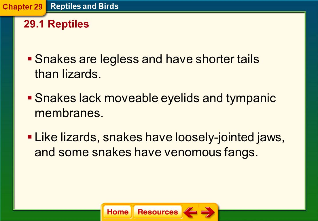 Lizards and Snakes 29.1 Reptiles Reptiles and Birds  Lizards have legs with clawed toes. Chapter 29  Lizards usually have moveable eyelids, a lower