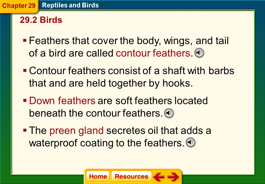 29.2 Birds Reptiles and Birds Chapter 29