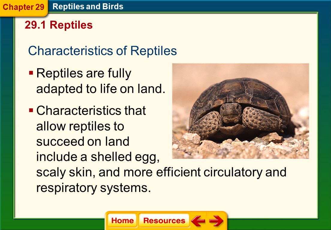 Click on a lesson name to select. Chapter 29 Reptiles and Birds Section 1: Reptiles Section 2: Birds