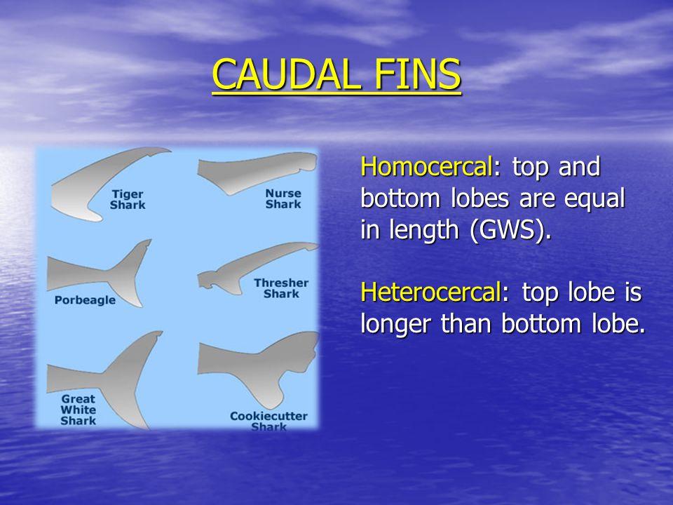 THE HARD TRUTH Fisherman kill between 30-100 million sharks / year.