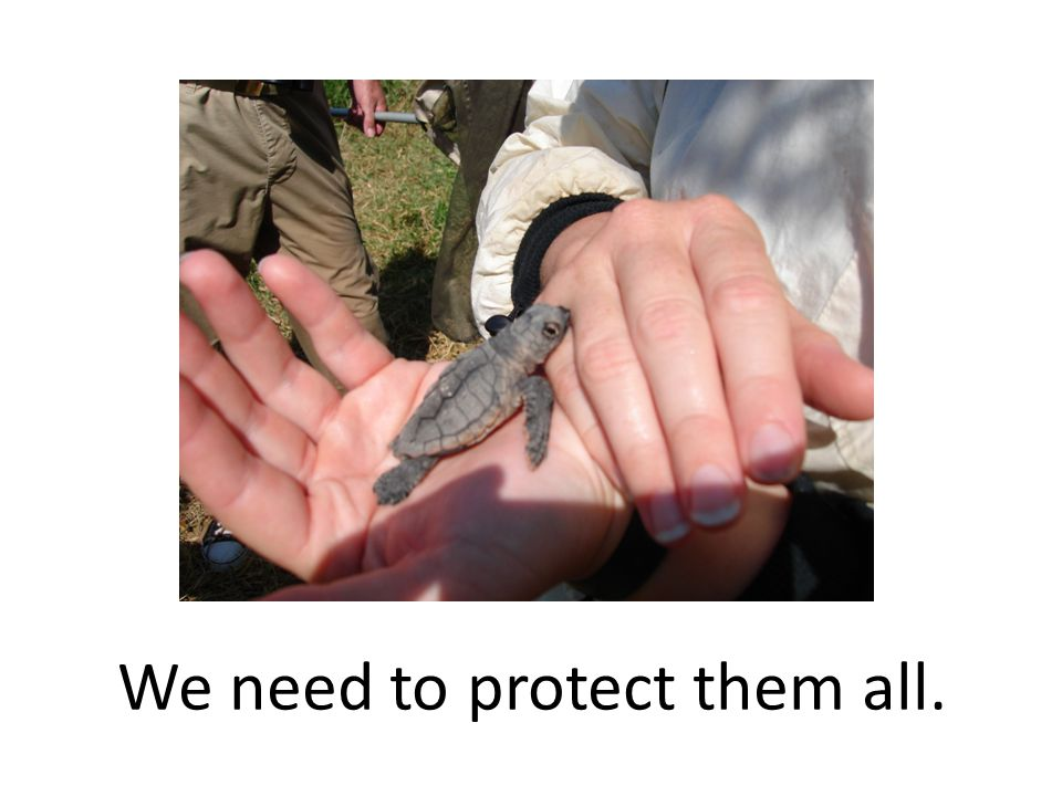 We need to protect them all.