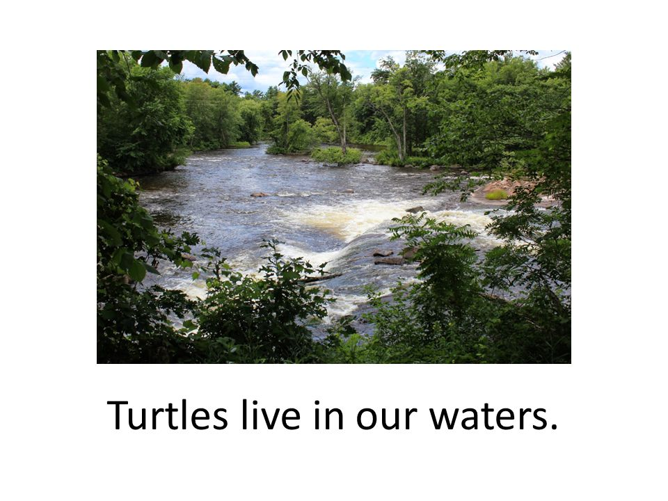 Teacher Notes: After reading - discussion and reflection ideas: Types of turtles.