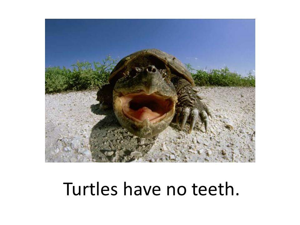 Turtles have no teeth.