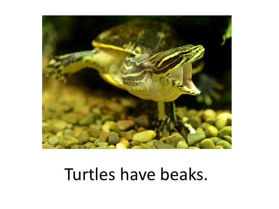Turtles have beaks.