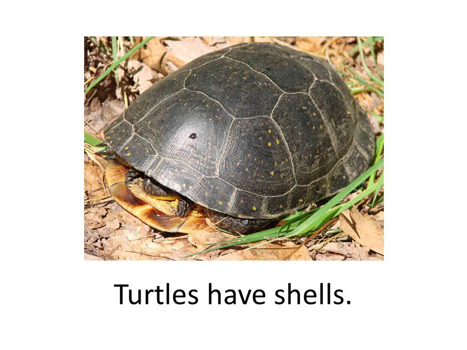 Turtles have shells.