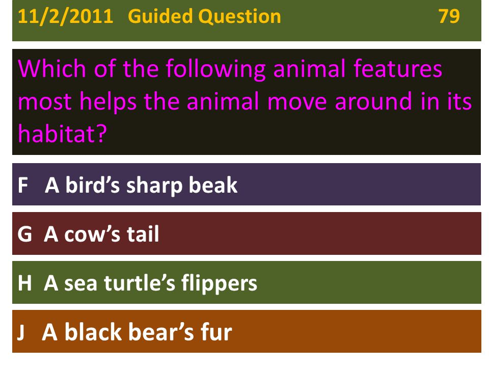 Which of the following animal features most helps the animal move around in its habitat.