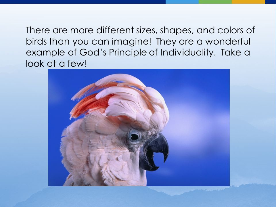 There are more different sizes, shapes, and colors of birds than you can imagine! They are a wonderful example of God's Principle of Individuality. Ta