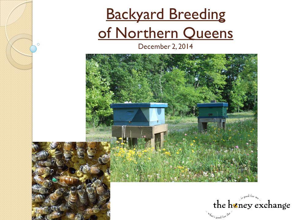 Backyard Breeding of Northern Queens December 2, 2014