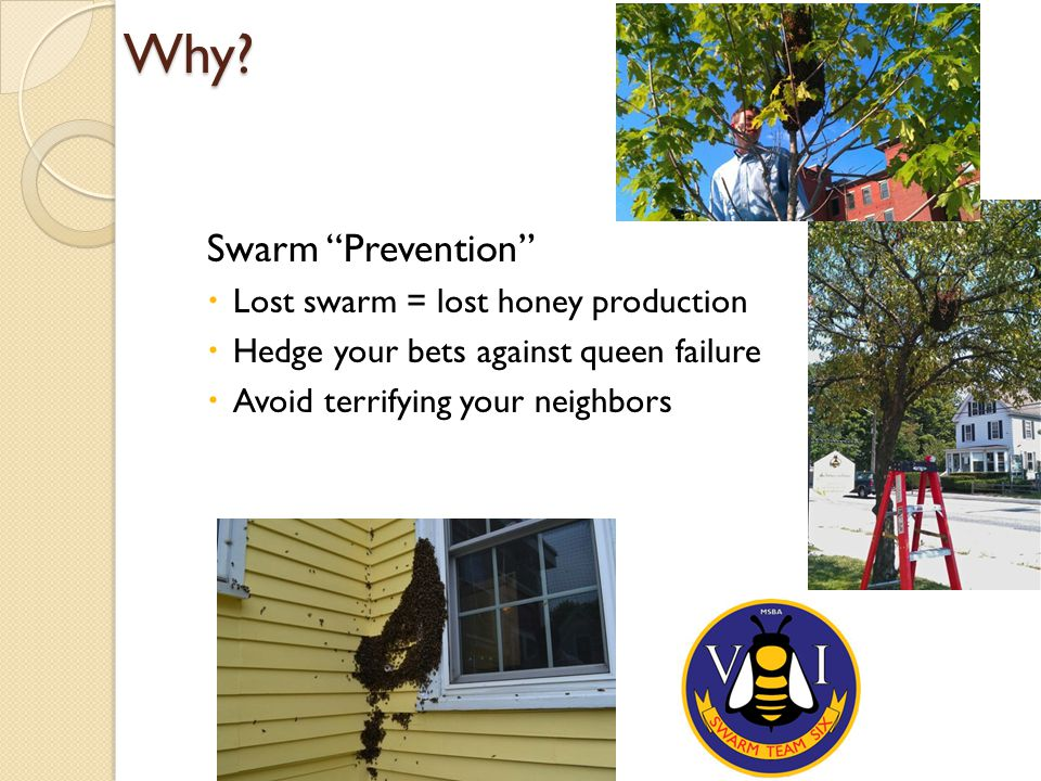 """Why? Swarm """"Prevention""""  Lost swarm = lost honey production  Hedge your bets against queen failure  Avoid terrifying your neighbors"""