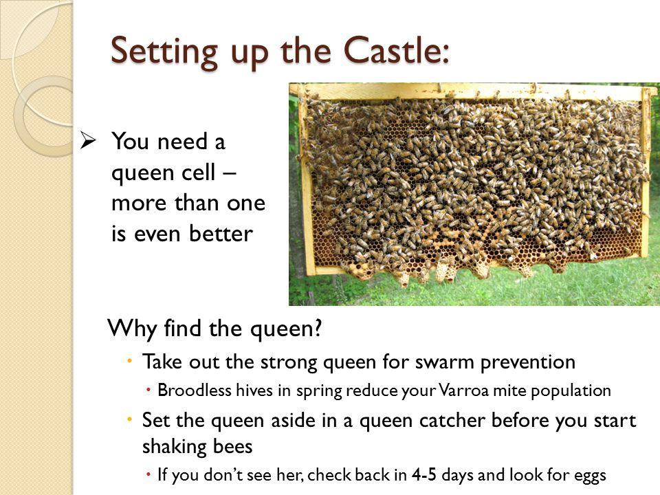 Setting up the Castle: Why find the queen.