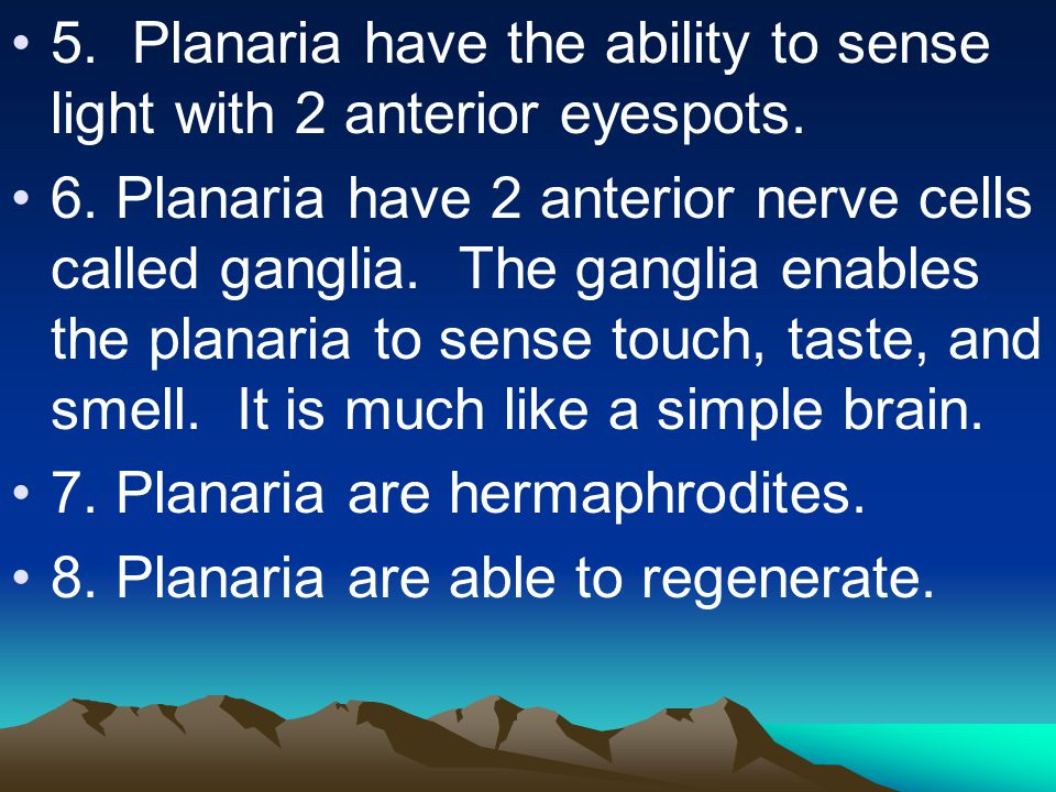 5. Planaria have the ability to sense light with 2 anterior eyespots. 6. Planaria have 2 anterior nerve cells called ganglia. The ganglia enables the