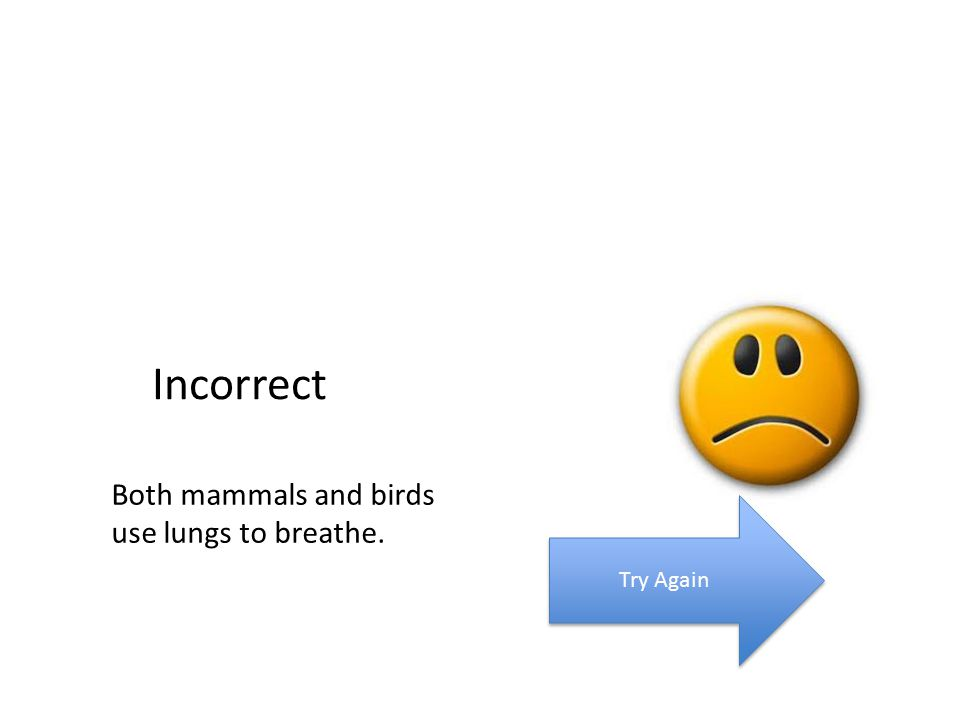 Incorrect Try Again Both mammals and birds use lungs to breathe.