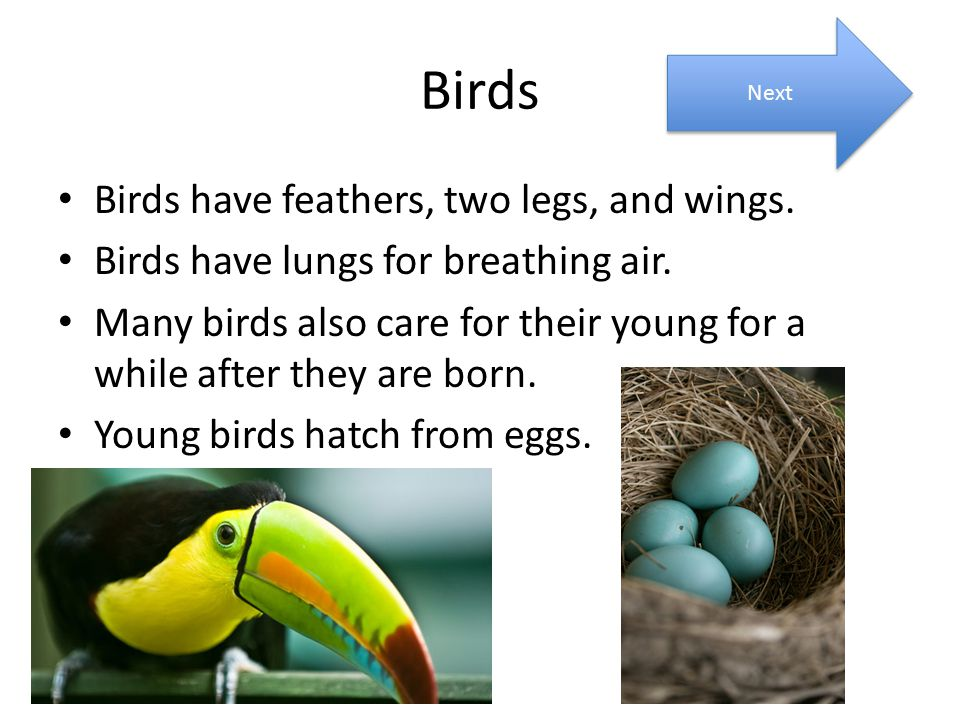 Birds Birds have feathers, two legs, and wings. Birds have lungs for breathing air. Many birds also care for their young for a while after they are bo
