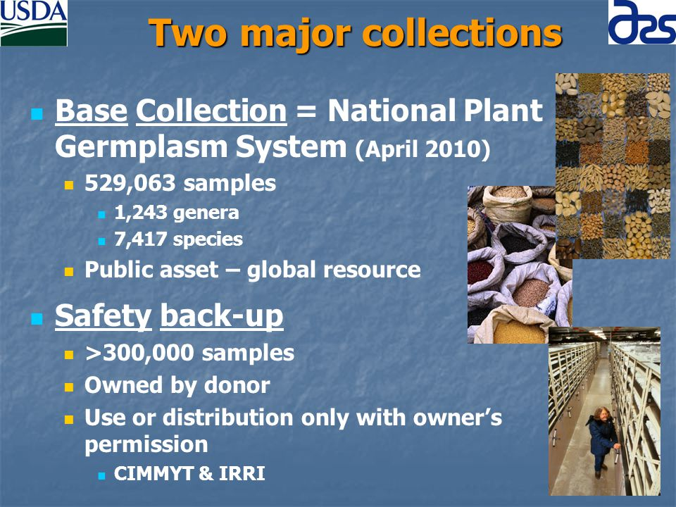 Two major collections Base Collection = National Plant Germplasm System (April 2010) 529,063 samples 1,243 genera 7,417 species Public asset – global resource Safety back-up >300,000 samples Owned by donor Use or distribution only with owner's permission CIMMYT & IRRI