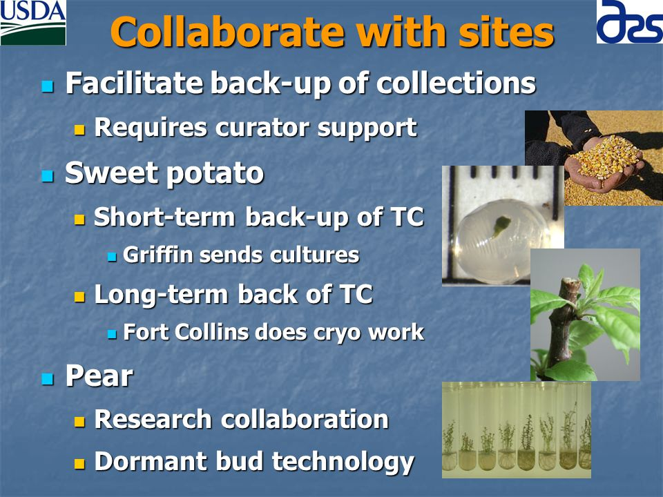 Collaborate with sites Facilitate back-up of collections Facilitate back-up of collections Requires curator support Requires curator support Sweet potato Sweet potato Short-term back-up of TC Short-term back-up of TC Griffin sends cultures Griffin sends cultures Long-term back of TC Long-term back of TC Fort Collins does cryo work Fort Collins does cryo work Pear Pear Research collaboration Research collaboration Dormant bud technology Dormant bud technology