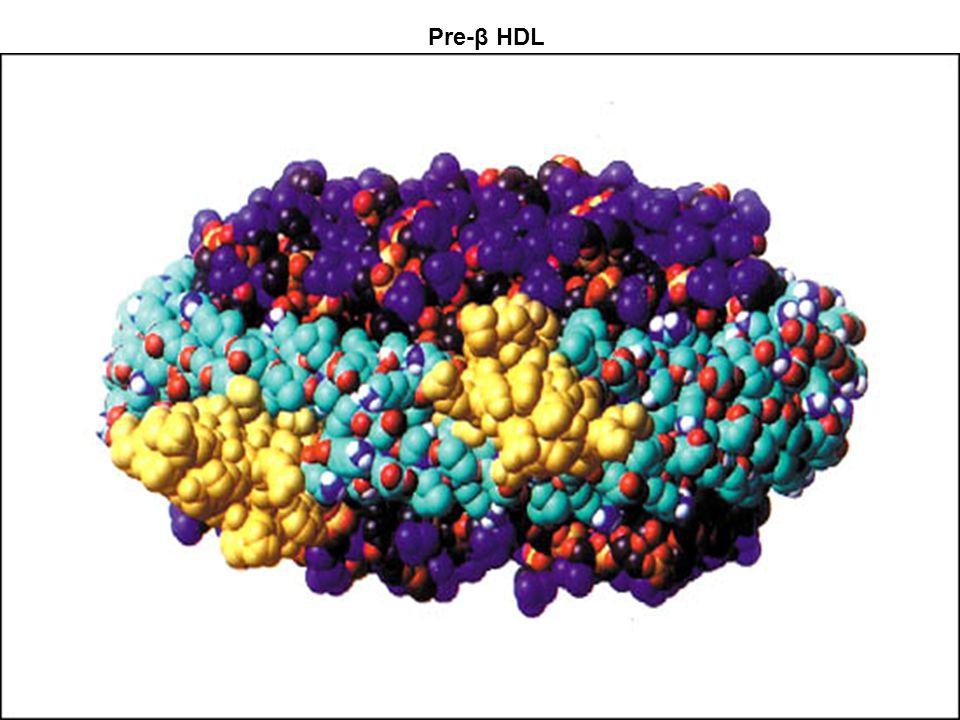 0 10 20 30 40 50 60 70 80 90 100 20406080100120140160180200220240260280300500 Phenotype A Phenotype B % Cumulative frequency TG (mg/dL) Austin M et al.