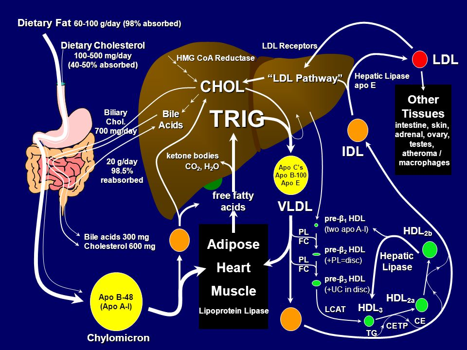 Familial Hypercholesterolemia (FH)