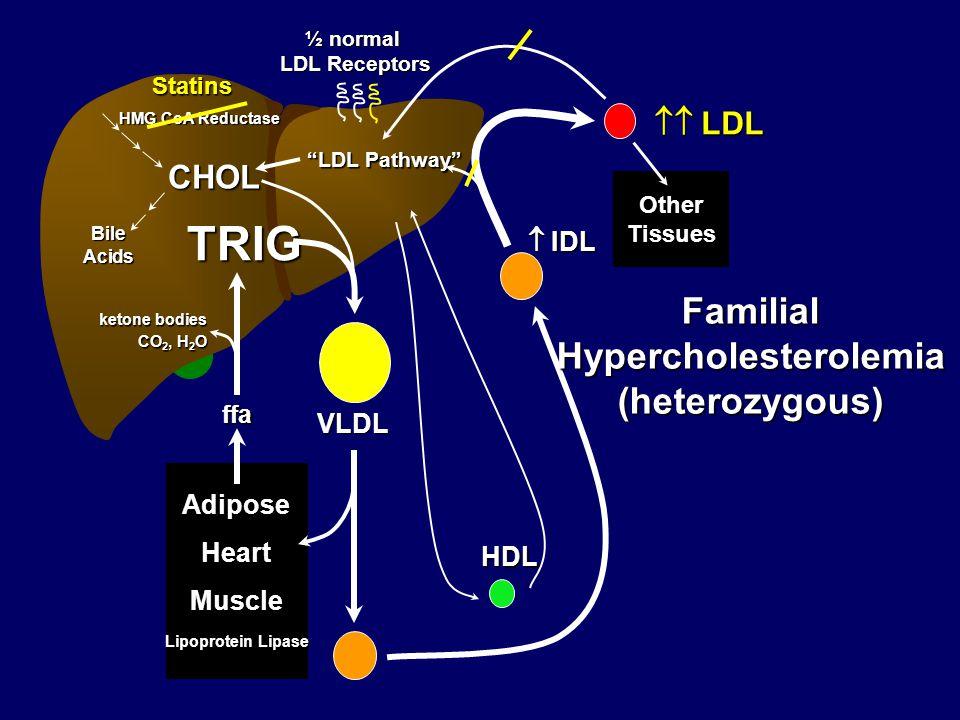 Test (method) Berkley Heart Lab (GGE), Lipo Print LipoProfile/ LipoScience (NMR) VAP/Atherotech (Ultracentrifugation) Pro/Con Established method, well validated, rel.