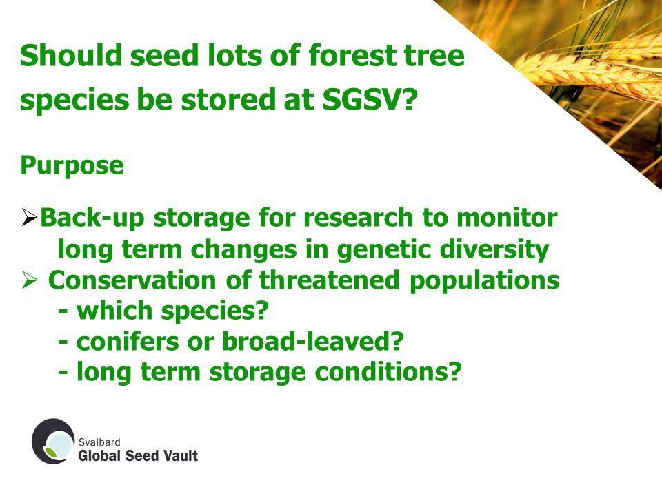 Should seed lots of forest tree species be stored at SGSV.