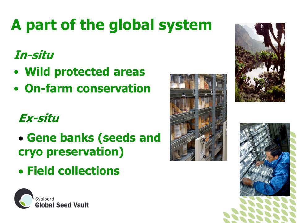 A part of the global system In-situ Wild protected areas On-farm conservation Ex-situ  Gene banks (seeds and cryo preservation)  Field collections