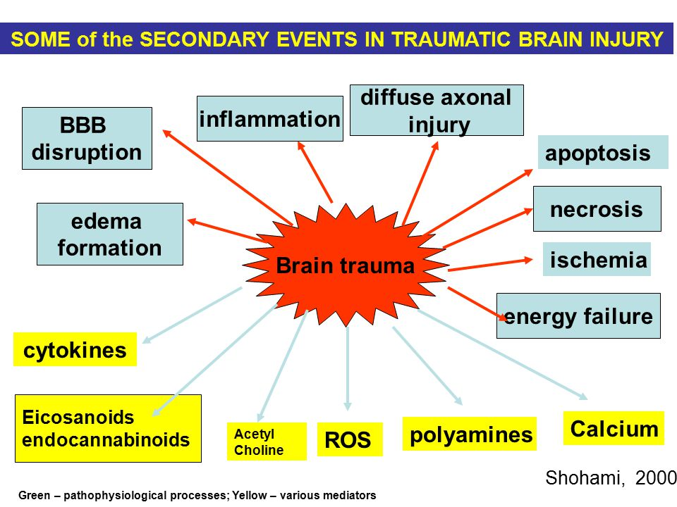 Brain trauma BBB disruption diffuse axonal injury edema formation Eicosanoids endocannabinoids necrosis energy failure cytokines SOME of the SECONDARY