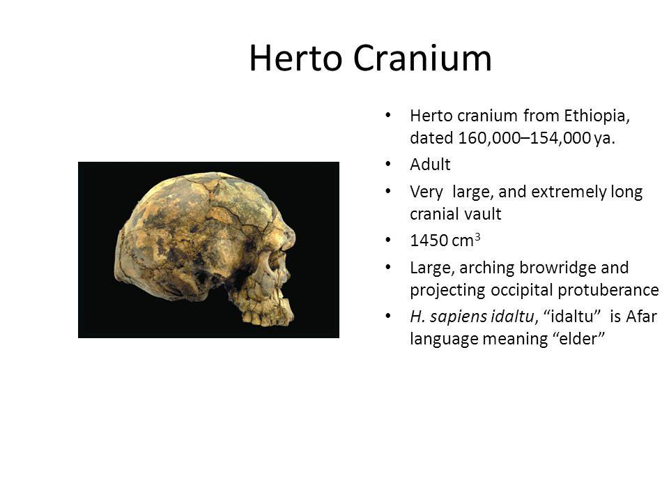 Herto Cranium Herto cranium from Ethiopia, dated 160,000–154,000 ya.