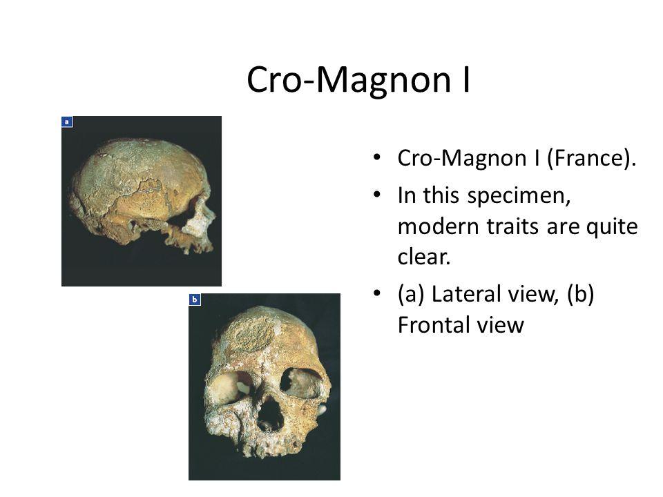 Cro-Magnon I Cro-Magnon I (France).In this specimen, modern traits are quite clear.