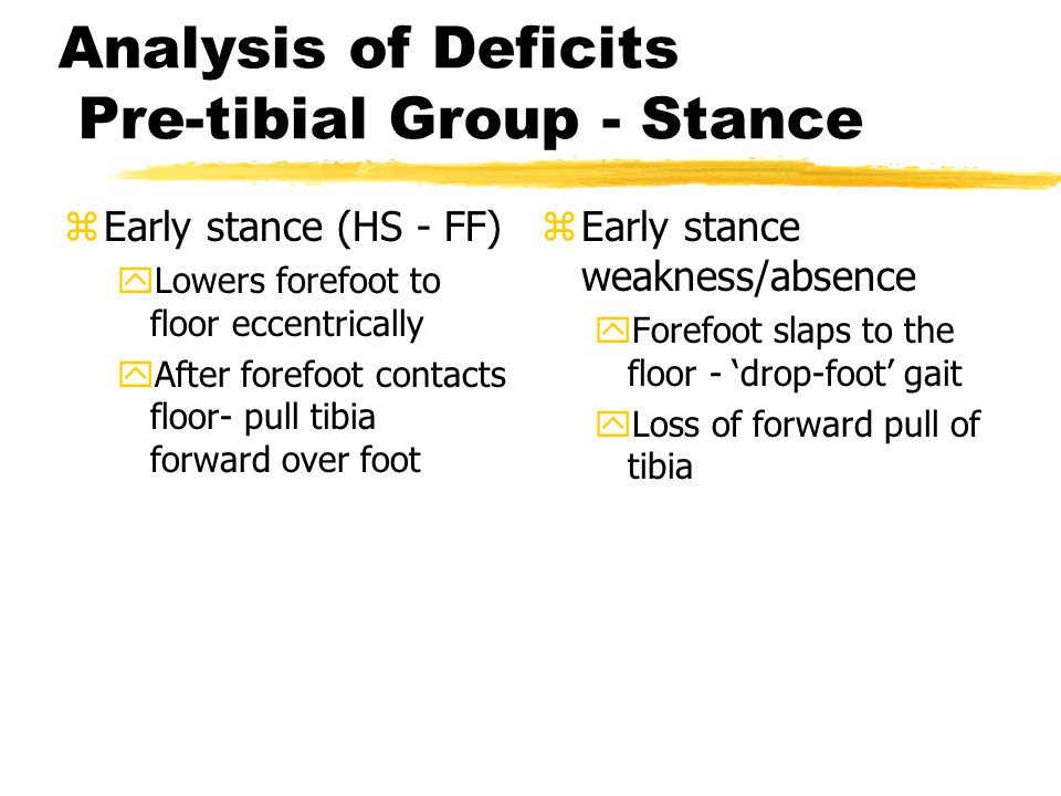 Analysis of Deficits Pre-tibial Group - Stance zEarly stance (HS - FF) yLowers forefoot to floor eccentrically yAfter forefoot contacts floor- pull ti