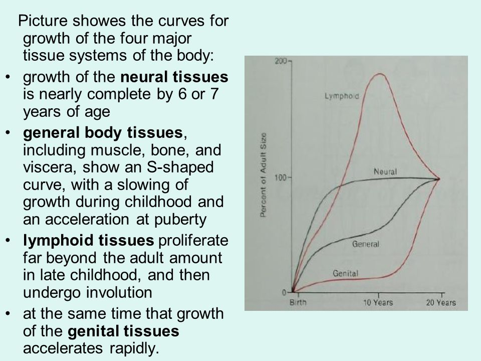 Maxilla (Nasomaxillary complex) Postnatal growth occurs in two ways: at the sutures that connect the maxilla to the cranium and cranial base by surface remodeling.
