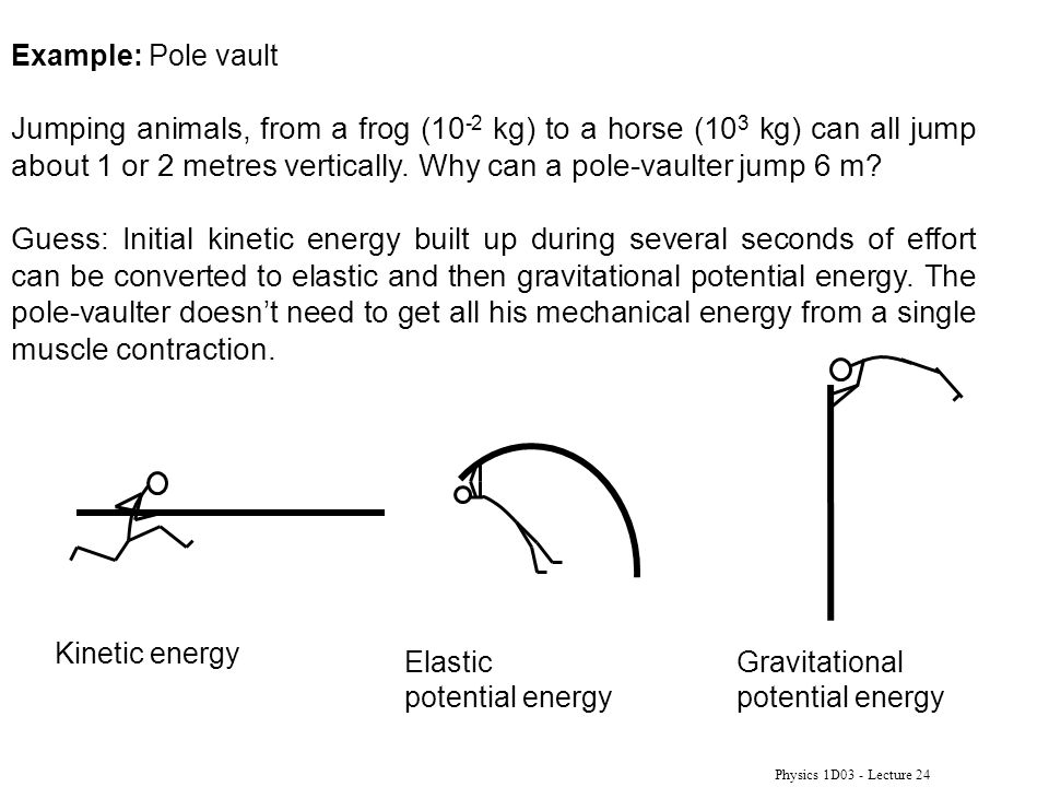 Physics 1D03 - Lecture 24 Example: Pole vault Jumping animals, from a frog (10 -2 kg) to a horse (10 3 kg) can all jump about 1 or 2 metres vertically