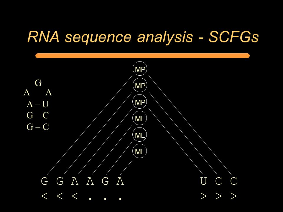 RNA sequence analysis - SCFGs MP G G A A G A U C C > > MP ML A – U G – C AA G ML