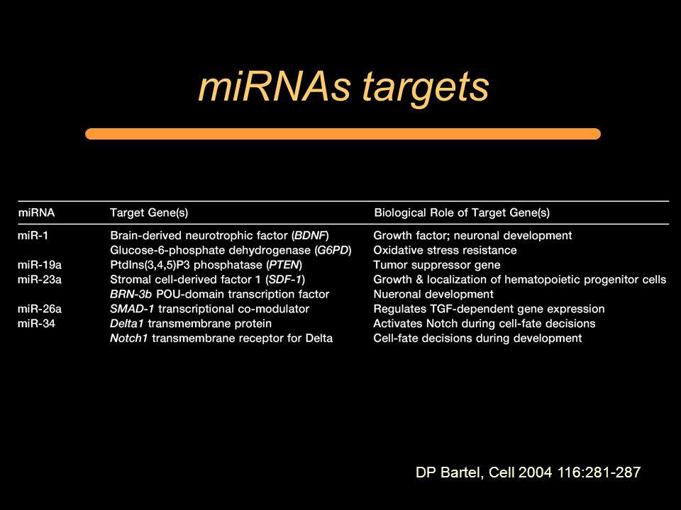 miRNAs targets DP Bartel, Cell 2004 116:281-287