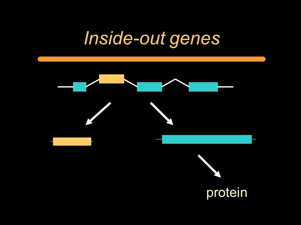 Inside-out genes protein