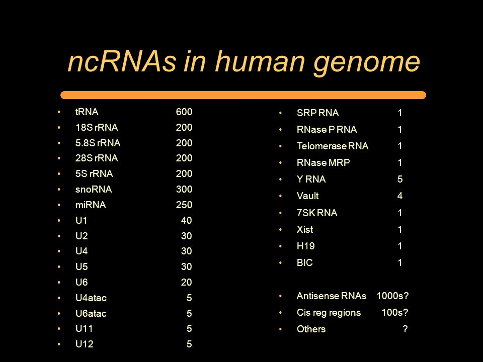ncRNAs in human genome tRNA600 18S rRNA200 5.8S rRNA200 28S rRNA200 5S rRNA200 snoRNA300 miRNA250 U1 40 U2 30 U4 30 U5 30 U6 20 U4atac 5 U6atac 5 U11