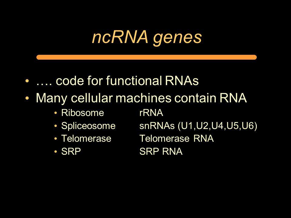 ncRNA genes ….