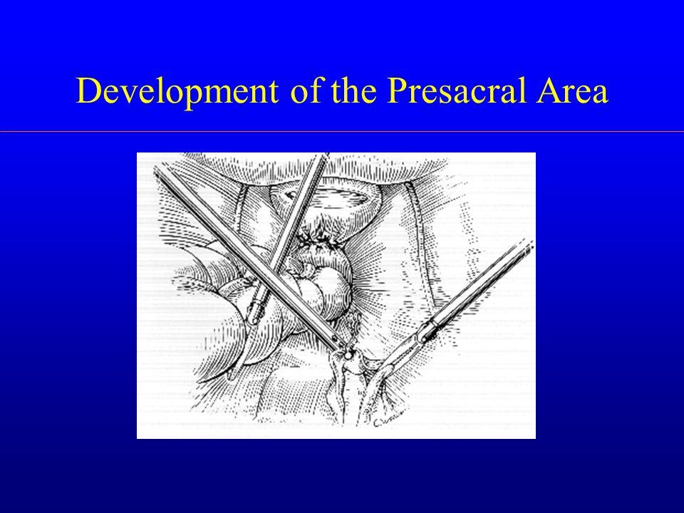 Development of the Presacral Area