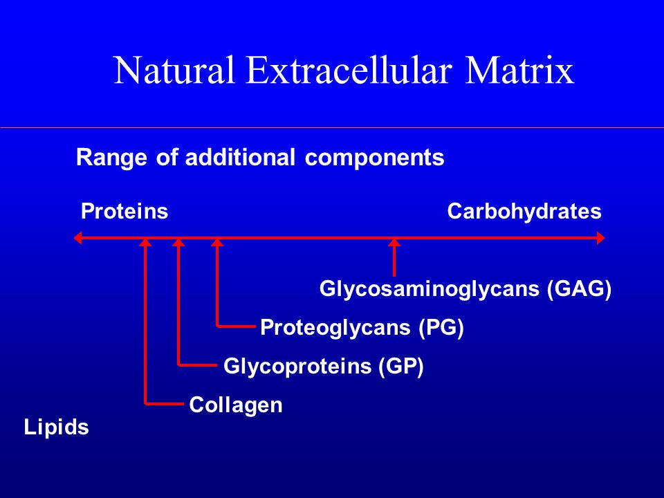 Natural Extracellular Matrix Range of additional components ProteinsCarbohydrates Glycosaminoglycans (GAG) Proteoglycans (PG) Glycoproteins (GP) Collagen Lipids