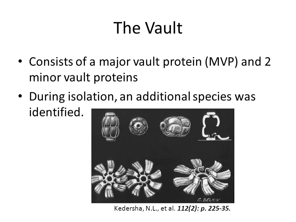 The Vault Consists of a major vault protein (MVP) and 2 minor vault proteins During isolation, an additional species was identified. Kedersha, N.L., e