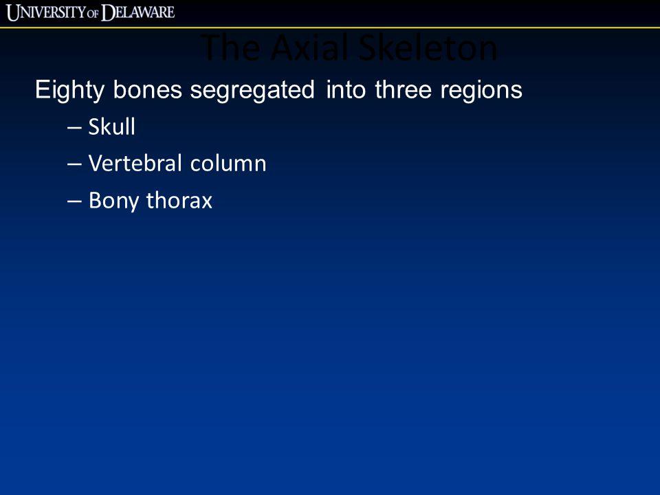 The Axial Skeleton Eighty bones segregated into three regions – Skull – Vertebral column – Bony thorax