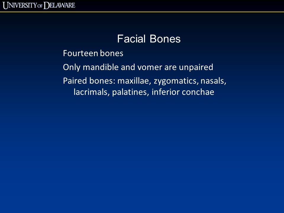 Facial Bones Fourteen bones Only mandible and vomer are unpaired Paired bones: maxillae, zygomatics, nasals, lacrimals, palatines, inferior conchae