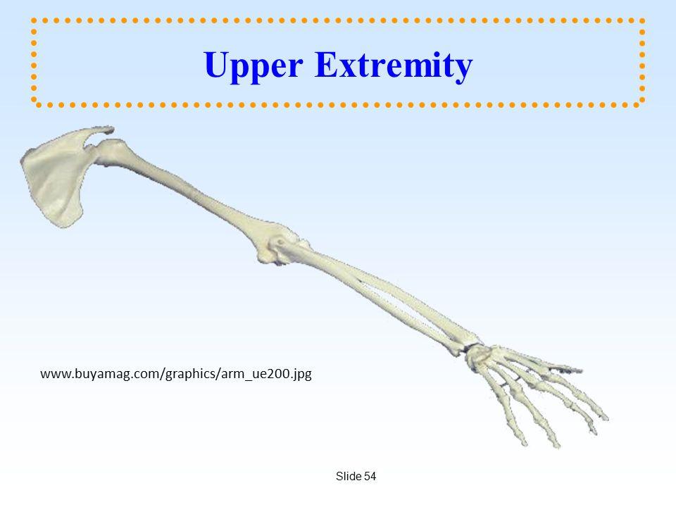 Slide 54 Upper Extremity www.buyamag.com/graphics/arm_ue200.jpg