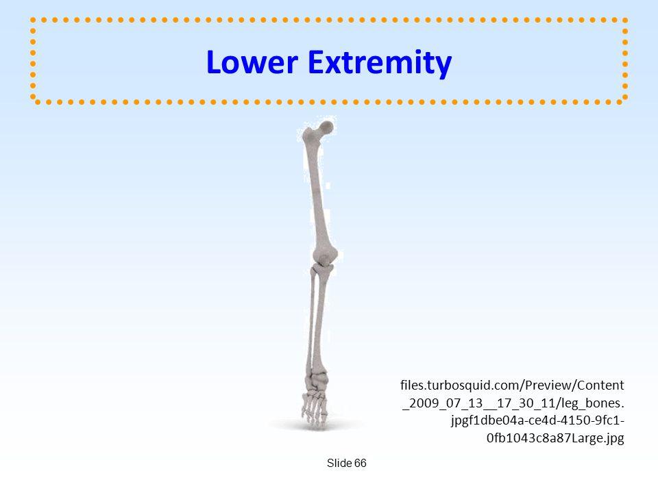 Slide 66 Lower Extremity files.turbosquid.com/Preview/Content _2009_07_13__17_30_11/leg_bones.