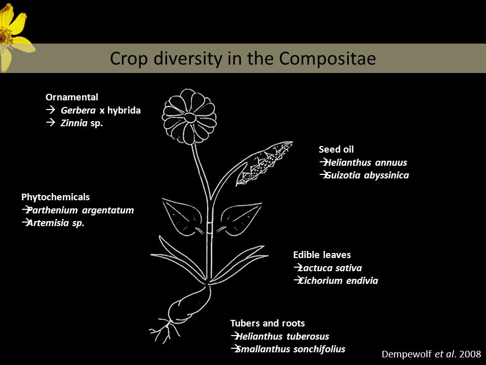 Crop diversity in the Compositae Dempewolf et al.