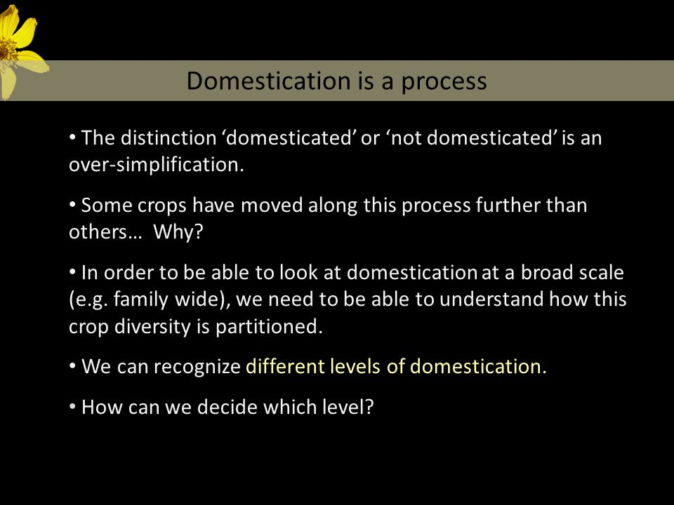 The distinction 'domesticated' or 'not domesticated' is an over-simplification. Some crops have moved along this process further than others… Why? In