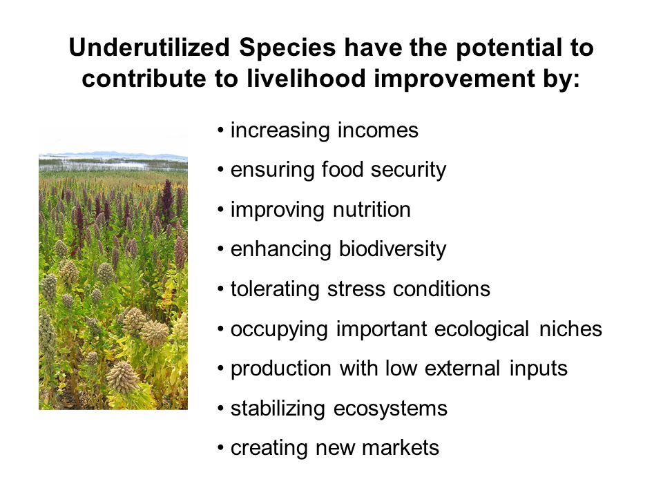 increasing incomes ensuring food security improving nutrition enhancing biodiversity tolerating stress conditions occupying important ecological niches production with low external inputs stabilizing ecosystems creating new markets Underutilized Species have the potential to contribute to livelihood improvement by: