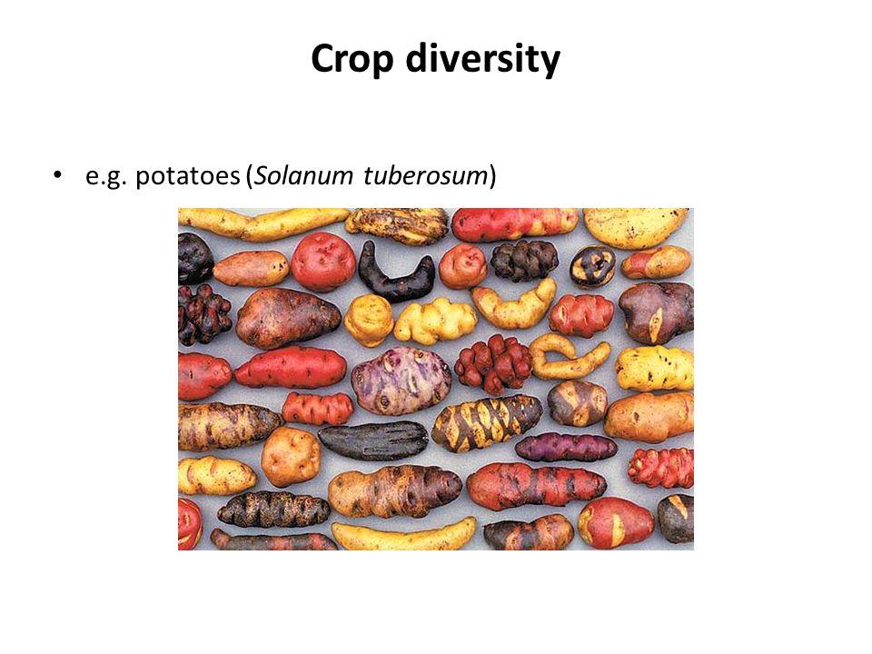 Crop diversity e.g. potatoes (Solanum tuberosum)