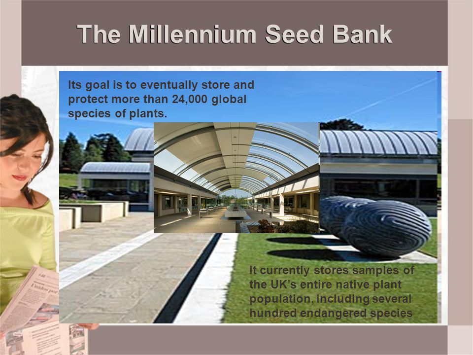 The Millennium Seed Bank Its goal is to eventually store and protect more than 24,000 global species of plants. It currently stores samples of the UK'