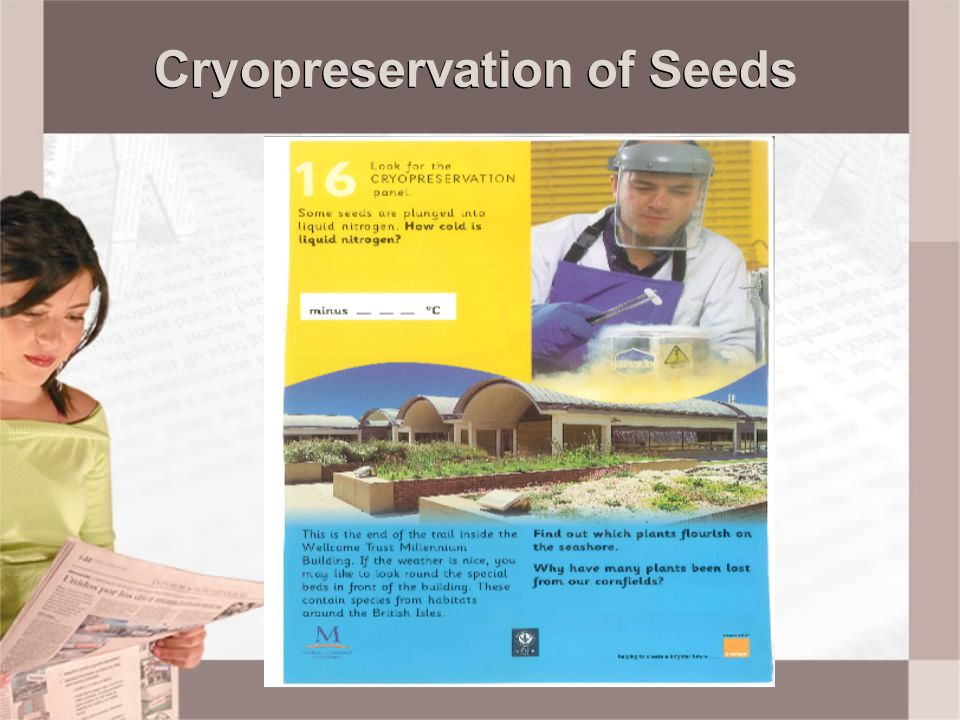 Cryopreservation of Seeds