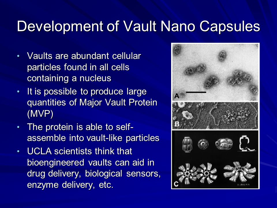 Development of Vault Nano Capsules Vaults are abundant cellular particles found in all cells containing a nucleus Vaults are abundant cellular particl