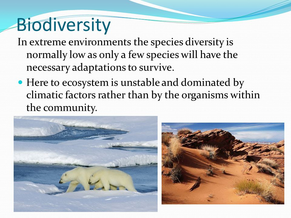 Biodiversity In extreme environments the species diversity is normally low as only a few species will have the necessary adaptations to survive.